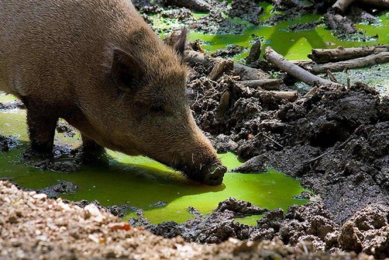 Das Jagdrevier im März – Suhlen und Teiche