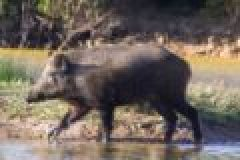 Jagd in der Türkei – Jagen am Bosporus