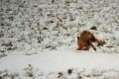 Das Jagdrevier im Februar – abwechslungsreicher als man denkt!