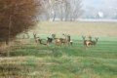 Fragen aus der Jägerprüfung zur Jagdausübung bis zum Schuss