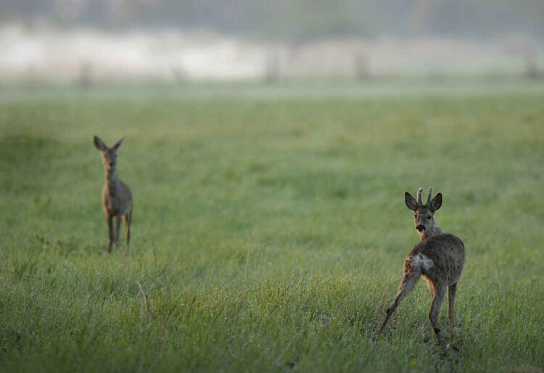 Fragen aus der Jägerprüfung zur Aufstellung der Abschusspläne