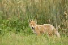 Fragen aus der Jägerprüfung: Das Haarwild