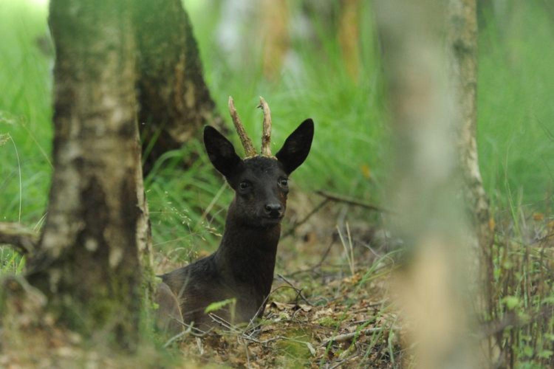 Fragen aus der Jägerprüfung zur jagdlichen Praxis
