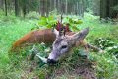 Fragen aus der Jägerprüfung zur Behandlung des erlegten Wilds