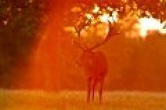 Fragen aus der Jägerprüfung zum Schalenwild