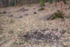 Fragen aus der Jägerprüfung zum Füttern von Wild