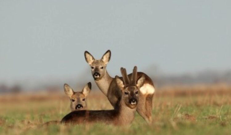 Fragen aus der Jägerprüfung zum Abschussplan