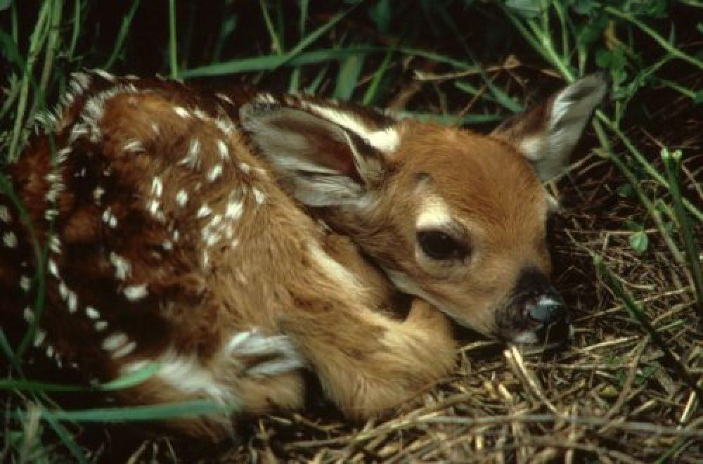 Die Jagdzeit – wann ist Schluss?