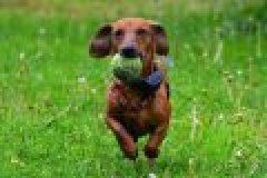Auf dem Weg zum Jagdhund: spielerische Förderung von Welpen