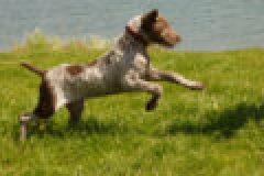 Fragen aus der Jägerprüfung zu Jagdhunden