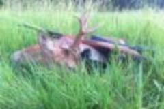 Fragen aus der Jägerprüfung zur Jagdausübung nach dem Schuss