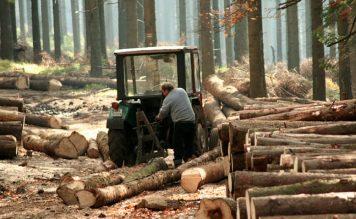 Kapitalanlage Wald