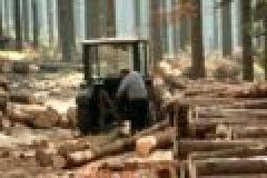 Der Wald als Kapitalanlage – krisensicher und umweltfreundlich
