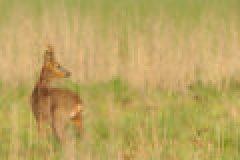 Fragen aus der Jägerprüfung zur Anatomie und Altersbestimmung der Tiere