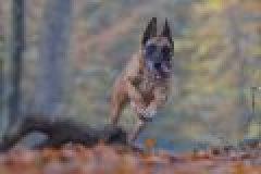 Freilaufende Hunde im Revier