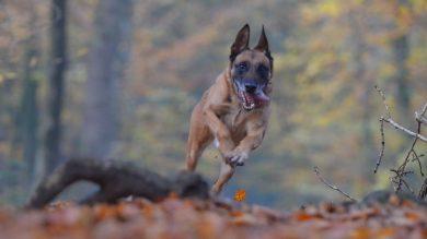 freilaufender-hund-wald