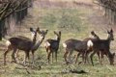 Fragen aus der Jägerprüfung zu Begriffen und Grundlagen der Bejagung
