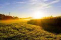 Sommerjagd: Sauen im Feld