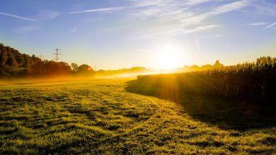 lichtung-morgens