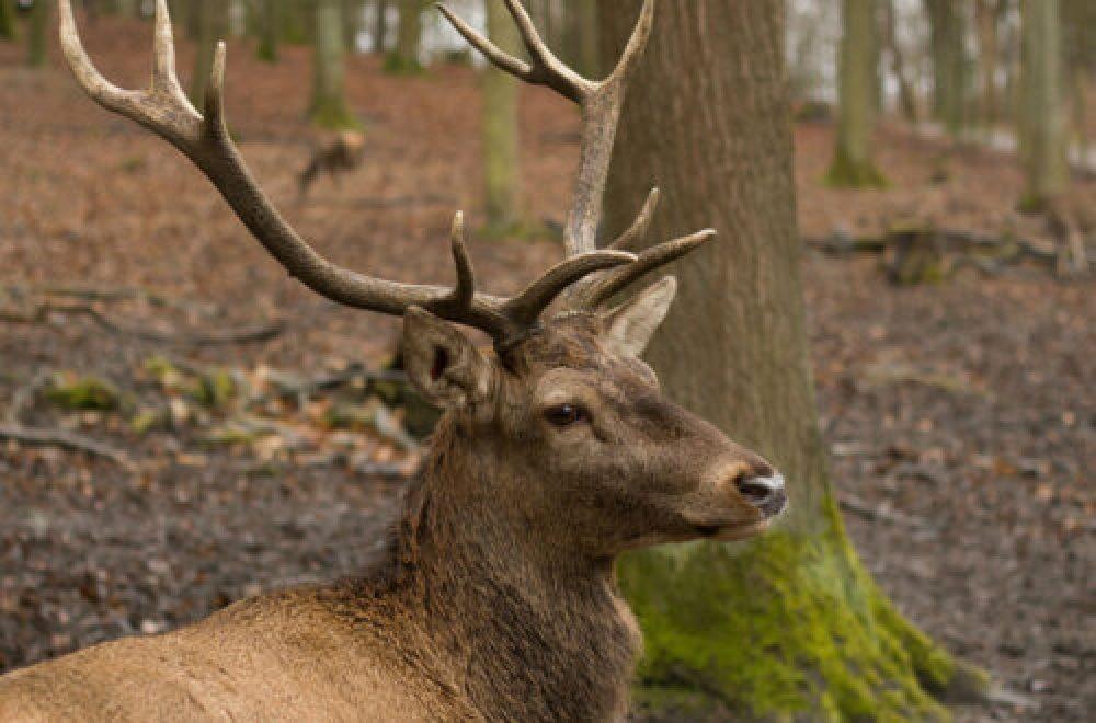 Fragen aus der Jägerprüfung zu Wildkrankheiten