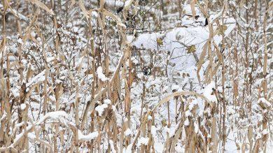 realtree-camo-pattern-realtree-ap-snow-01