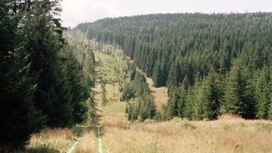 Grenzstreife DDR Jagd