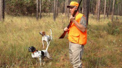 Die Notwendigkeit eines Treibereinsatzes zusätzlich zu den Hundeführern hängt von den Revierverhältnissen ab