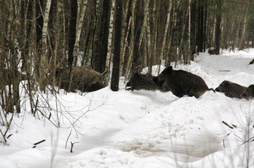 Jagd in Deutschland – Jagdreisen weltweit mit K&K Premium Jagd