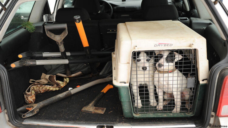 Jagdhund: Fragen aus der Jägerprüfung