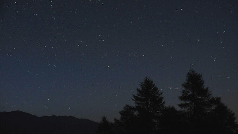 Nachtjagd auf Schwarzwild – Tipps zum Jagderfolg