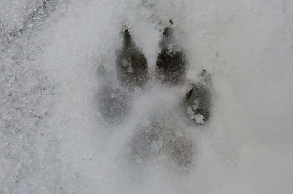 Vorsicht vor dem Wolf?