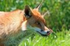 Das Jagdrevier im November: Im Niederwildrevier zur Haupterntezeit