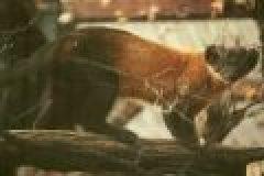 Fragen aus der Jägerprüfung zu Mardern