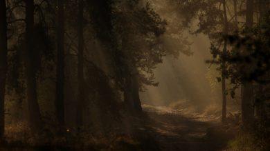 Jagd im Mondlicht: Wald im Büchsenlicht