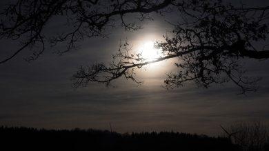 Ansitz im Mondlicht