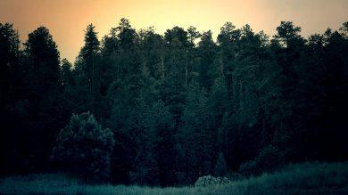 Wald in der Dämmerung – ideal für den Abendansitz