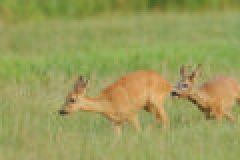 Hege und Jagd im August