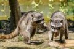 Invasive Arten: Tierschutz-Forderungen realitätsfern