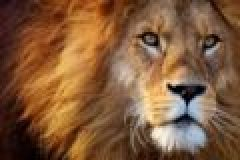 Märchenstunde über Löwenschutz
