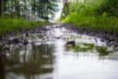 Jagd bei Regen