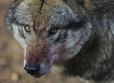 Vollmond Jagd Entfernungsmesser : Jagd archive seite von