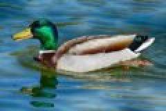 Hase, Ente & Co – Die Jagd auf Niederwild im Oktober