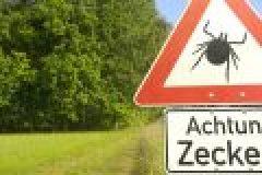 Das gefährlichste Tier Deutschlands: die Zecke