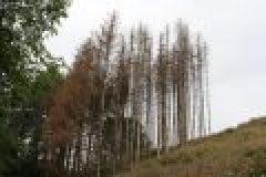 Waldsterben und Jagd