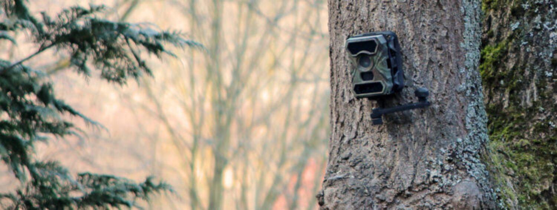 Wildkameras – Sinnvoll oder nur Schnick Schnack?