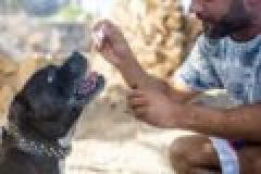 Cannabidiol Öl für Hunde und Jagdhunde